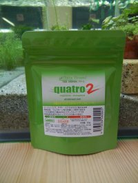 quatro2 クアトロ2 50g(Ebita Breed)